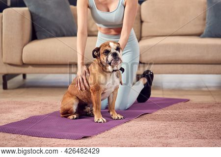 Close Up Of Woman In Fitness Clothing At Home In Lounge With Pet English Bulldog