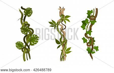 Liana As Long-stemmed Woody Vine Climbing And Tangled Around Tree Vector Set