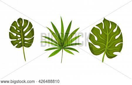 Tropical Leaf On Stem As Exotic Flora Vector Set