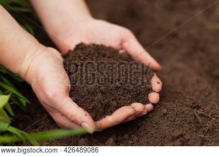 Organic Ground. Black Fertile Soil In The Hands. Fertilizing The Dirt.