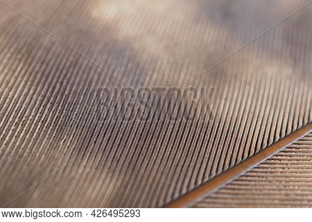 Bird Feather Close Up. Light Brown Natural Background Or Wallpaper With A Rhythmic Pattern. Macro