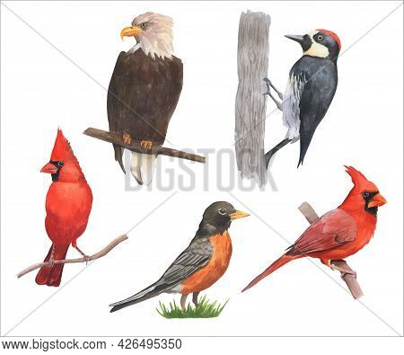 Watercolor Birds Set. Eagle, Cardinal, Woodpecker Are Isolated On White Background. Collection Of Br