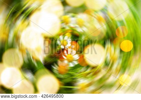 Floral Defocused Background With Glowing Bokeh. Summer Background.