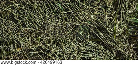 Fishing Net Texture And Background. Empty Green Fishing Net Lying On Sea Shore
