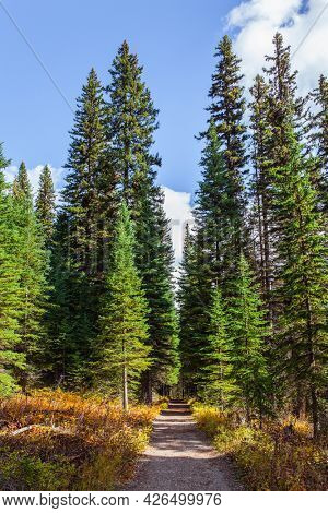 Coniferous forest surrounds a cold lake. The Canadian Rockies, Canada. Picturesque dirt path in the forest. Early morning walk along the shores of Emerald Lake