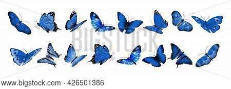Realistic Blue Butterflies. Flying Butterfly, Isolated Bright Insects Collection. Decorative Spring