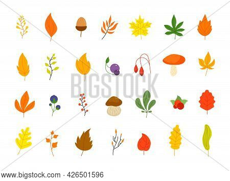 Flat Autumn Forest Elements. Leaves Berries Icons, Graphic Leaf. Oak Marple Foliage. Acorn And Rowan
