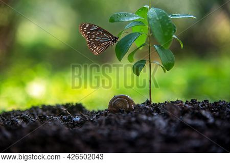Ecology And Environment Earth.  Planet And Tree With Butterfly In Human Hands Over Green And Sky Nat