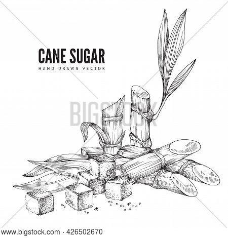 Cane Sugar Monochrome Background, Engraving Vector Illustration Isolated.