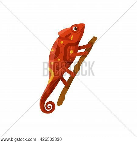 Bright Red Chameleon, Wild Lizard, Exotic Reptile Sitting On Tree Branch.