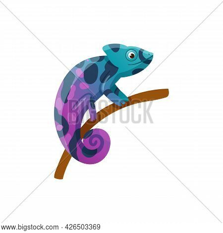 Colorful Exotic Small Lizard Reptile Chameleon Sitting On Branch.