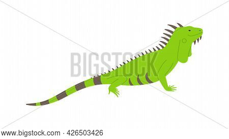 Wild Green Iguana Lizard Side View Flat Vector Illustration Isolated On White.
