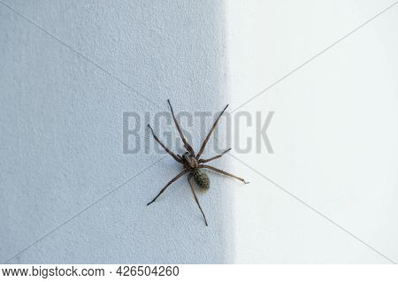 The Spider Sits On The Dark Side Of The Wall And Waits For Its Prey.