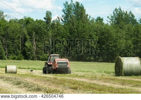 Agricultural Field During Hay Harvesting And Making Bales For Livestock