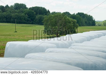 Farm Field With Hay Bales Making For Livestock And Packed In White Plastic For Storage