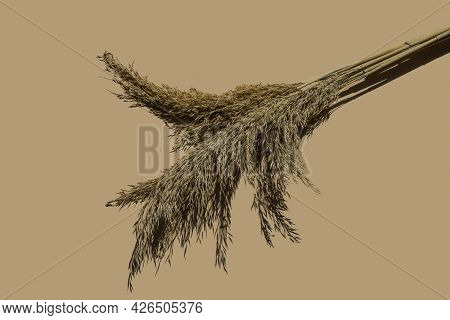 Dry Beige Cane On A Beige Background With A Hard Shadow. Beautiful Nature Trending Decor. Minimalist