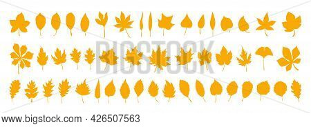 Big Set Of Vector Autumn Leaves, Herbal Elements. Collection Of Fall Simple Orange Leaves. 50 Silhou