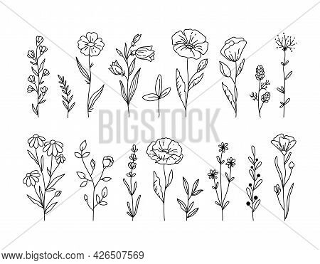 Wildflowers Black And White Clipart Bundle, Poppy Flower, Daisy, Chamomile Botanical Floral Isolated