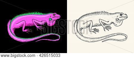 American Green Iguana. Lizard Or Exotic Reptiles. Wild Animals In Nature. Engraved Hand Drawn.