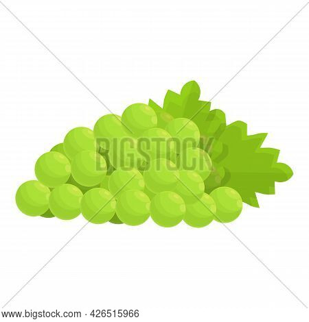 French Green Grapes Icon Cartoon Vector. France Wine Grape. Muscat Grapes