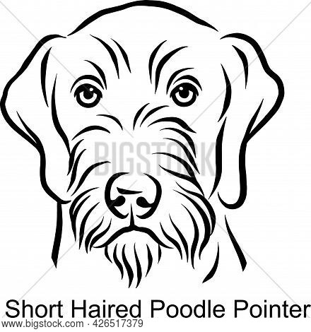 Short Haired Poodle Pointer Portrait Dog In Line Style - Pet Portrait In Light Style Head Isolated O