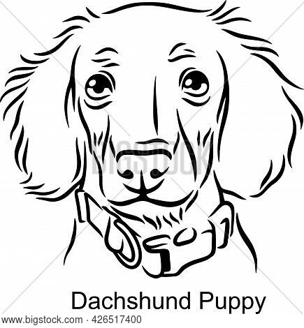 Dachshund Portrait Dog In Line Style - Pet Portrait In Light Style Head Isolated On White