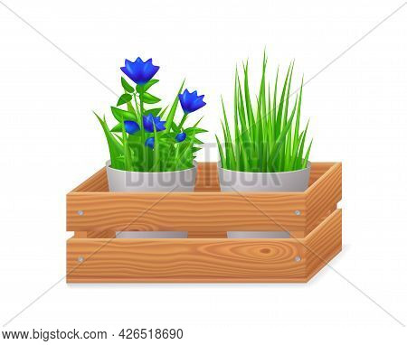 Flowerpots In Wooden Crate Isolated On White Background. 3d Garden Box With Blue Flowers And Green G