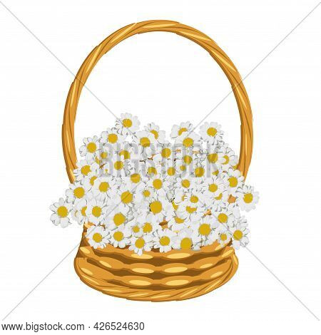 White Daisy In Basket Of Vines Art Object Isolated For Web, For Print