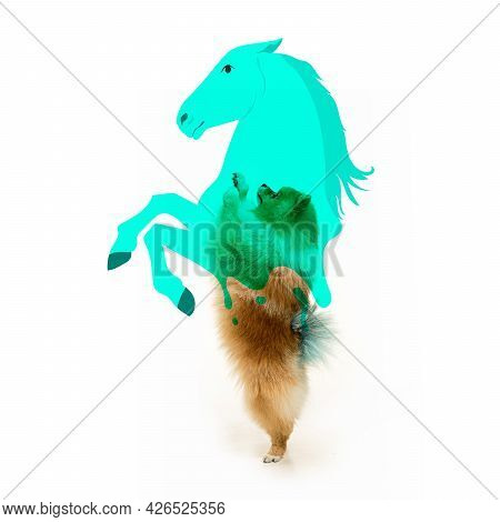 Side View Portrait Of Cute Playful Pomeranian Spitz In Motion Isolated Over White Background. Animal
