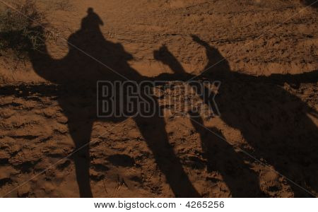 Camel Safari Shadows