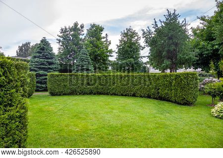 Evergreen Curved Thuja Hedge In A Garden Of Trees With Leaves And Pine Needle And A Green Lawn Sprin