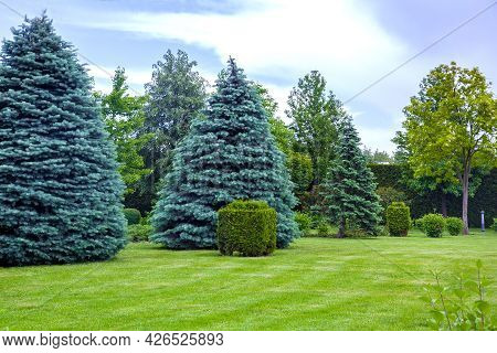 Coniferous Trees On A Meadow With A Lawn And A Trimmed Bush In A Park With Deciduous And Pine Trees,