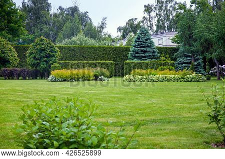 Landscape Design Of A Glade With Green Grass And Copy Space In The Background Hedge Of Evergreen Thu
