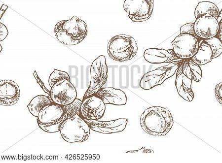 Hand Drawn Vector Macadamia Nut Core Pattern