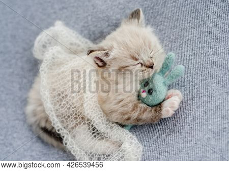 Adorable little fluffy ragdoll kitten sleeping under knitted blanket hugging toy rabbit on light blue fabric during newborn style photoshoot in studio. Cute napping kitty cat portrait