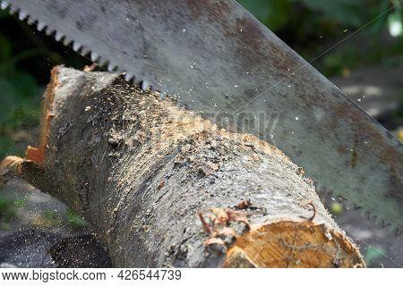 Close-up Cross Cut Saw Cutting A Tree Log.