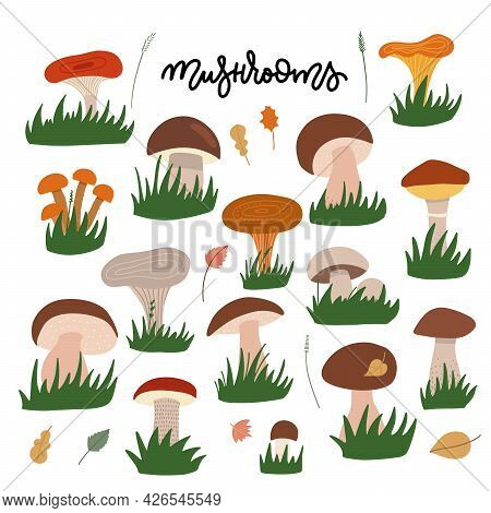 Forest Mushrooms With Gress Flat Illustrations Set. Edible And Fungi Color Drawing. Cartoon Chantere