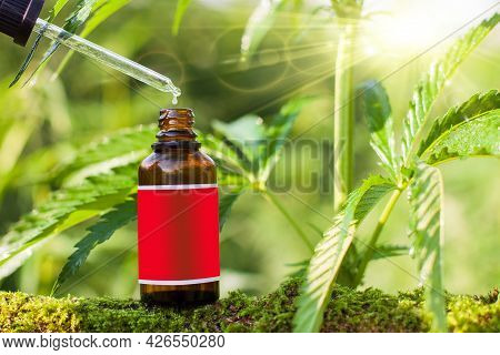 Hemp Oil Dropper In Bottle With Cannabis Tree Background. Empty Label - Copy Space.