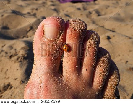 A ladybug beetle crawls on its toes. Women's foot on the background of beach sand. Healthy nails wit