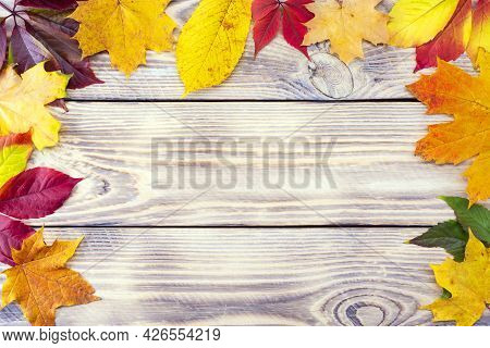 Colorful Fall Maple Leaves On Rustic Wooden Background. Life Cycle Of Fall Leaf. Thanksgiving Holida