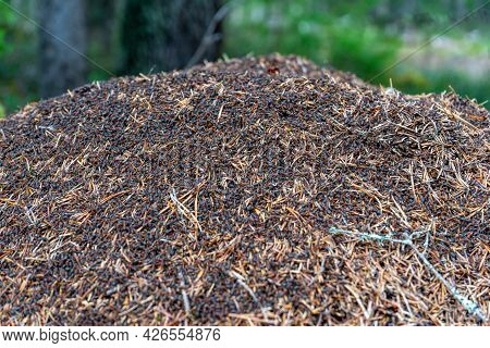 Anthill With Many Ants On The Surface