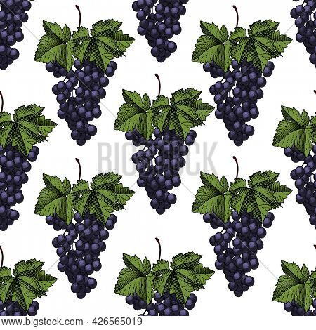 Seamless pattern of grapes. Bunch of grapes with leaves. Vintage engraving color stylized drawing.