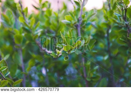 A Beautiful Green Leafy Opening In The Spring