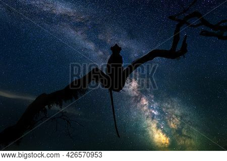 Beautiful Night Landscape With Monkey On Branch And The Milky Way Galaxy