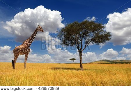 Beautiful Landscape With Nobody Tree And Giraffe In Africa