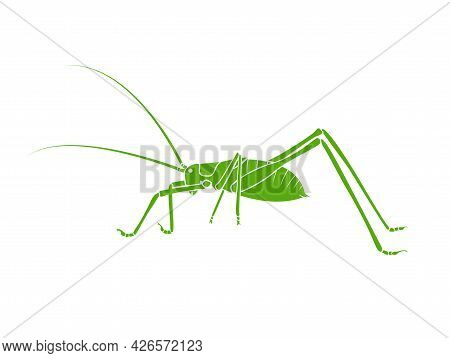 Vector Of Green Bush-cricket Long Horned Grasshopper On White Background. From Side View. Insect. An