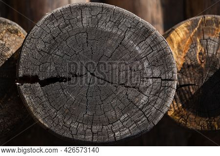 Close-up Of Cross Section Of Tree Trunk Showing Growth Rings. Log. Timber Wood Texture.