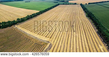 Aerial view of harvested wheat field and green fields. Haystacks lay upon the agricultural field. Photo taken on drone.