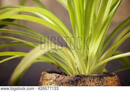 Close up of a small plant.