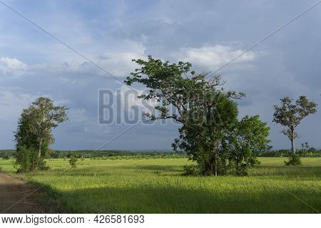 Storm Clouds Forming Over Rice Fields Signaling Start Of Rainy Season And Rice Productions
